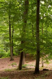 Naturbestattung - mehr als eine interessante Alternative